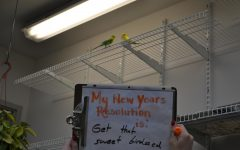 Voices in the Hall: New Years Resolutions